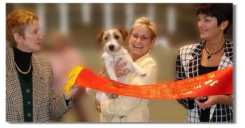 Ch.Inverbrae Murphy was a qualifier at the Top Terrier Competition for 2004-2005